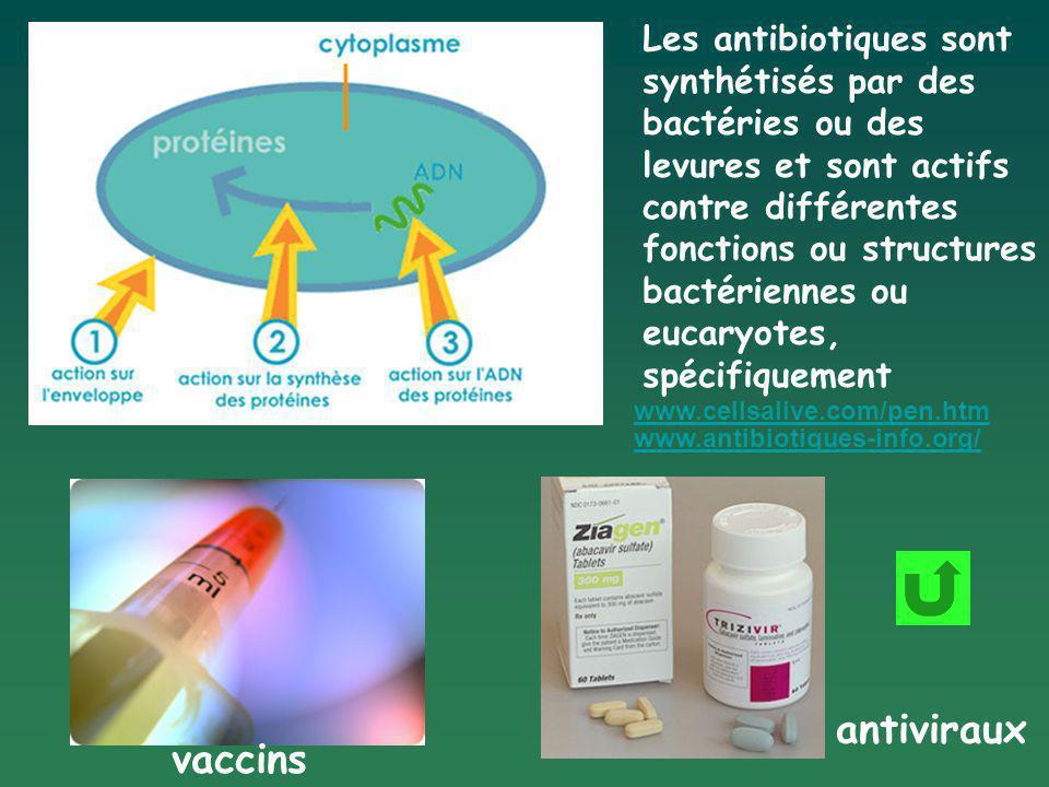 Les antibiotiques sont synthétisés par des bactéries ou des levures et sont actifs contre différentes fonctions ou structures bactériennes ou eucaryot