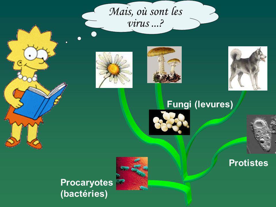 Procaryotes (bactéries) Fungi (levures) Protistes Mais, où sont les virus...?