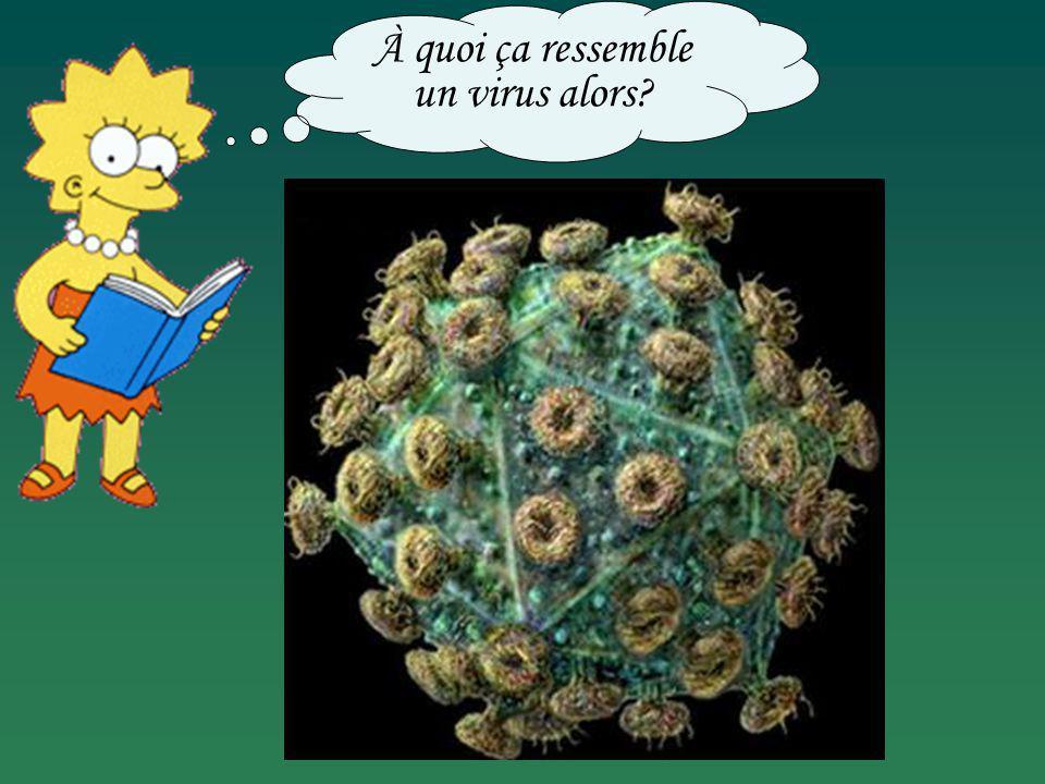 À quoi ça ressemble un virus alors?