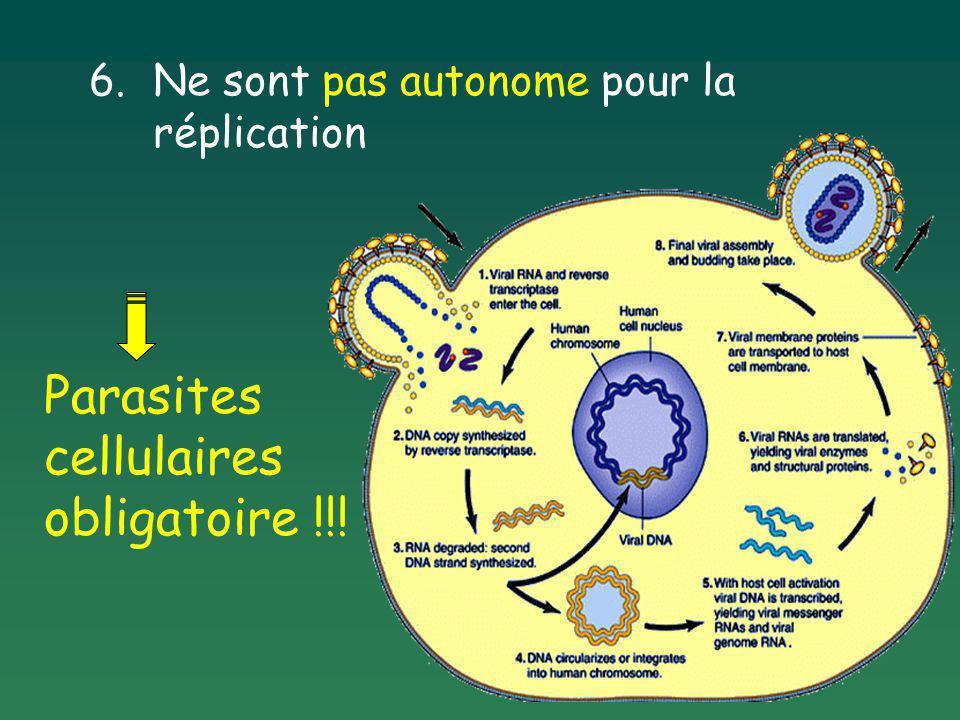 Quelles sont les cellules hôtes des virus .Cellules animales Cellules végétales bactériophages .