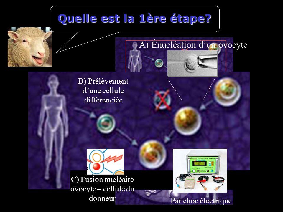 Quelle est la 1ère étape? A) Énucléation dun ovocyte B) Prélèvement dune cellule différenciée C) Fusion nucléaire ovocyte – cellule du donneur Par cho