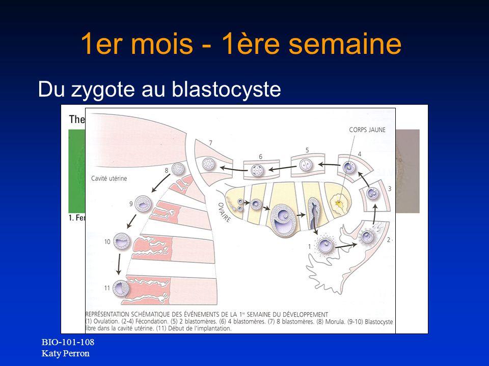 BIO-101-108 Katy Perron 1er mois - 1ère semaine Du zygote au blastocyste