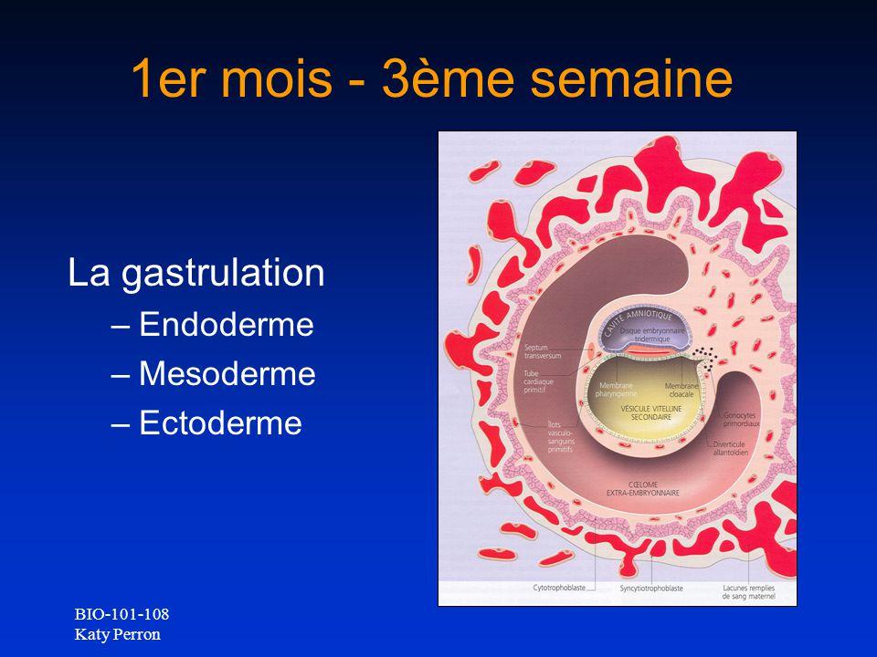 BIO-101-108 Katy Perron 1er mois - 3ème semaine La gastrulation –Endoderme –Mesoderme –Ectoderme