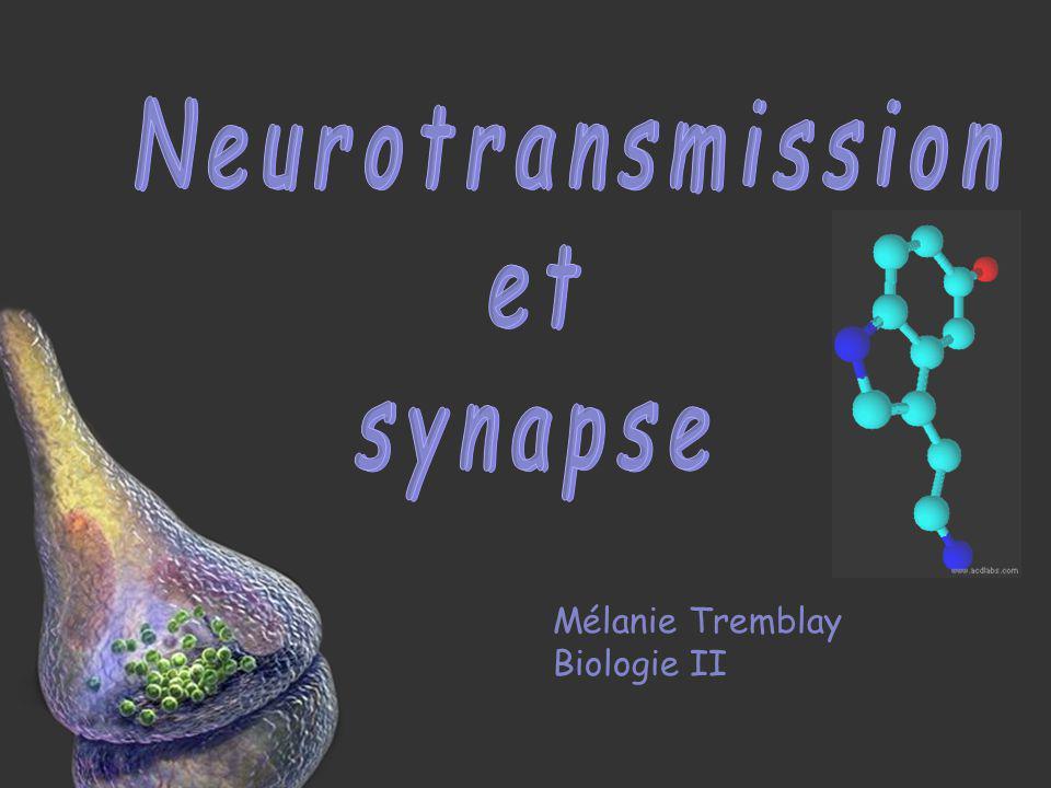 Synthèse Recapture Exocytose Influx nerveux Dépolarisation