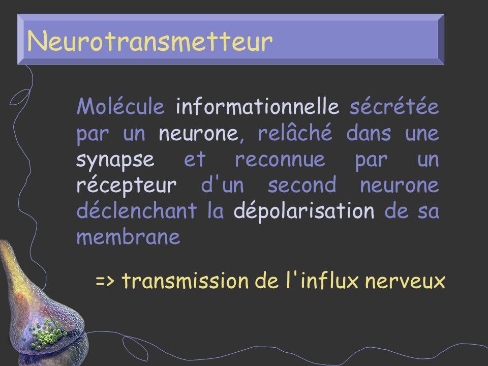 Neurotransmetteur Molécule informationnelle sécrétée par un neurone, relâché dans une synapse et reconnue par un récepteur d'un second neurone déclenc
