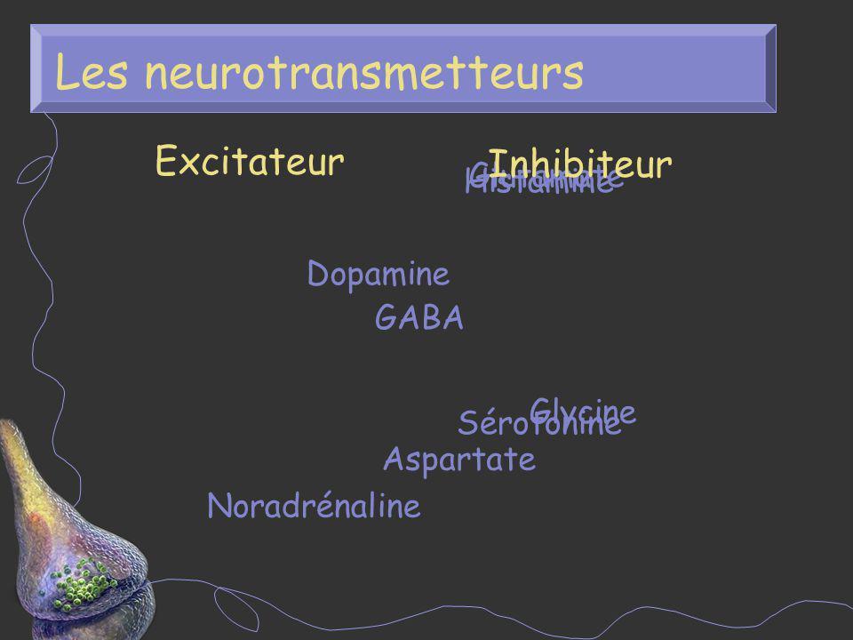 Relâche des neurotransmetteurs 1.Empaquetage 2. Transport 3.