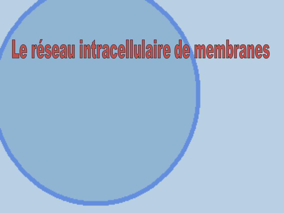 Laboratoire Titre: La cellule (microscopie) Date de remise: dans 1 semaine Sous forme dun article scientifique Pondération: 5% (voir plan de cours et site internet).