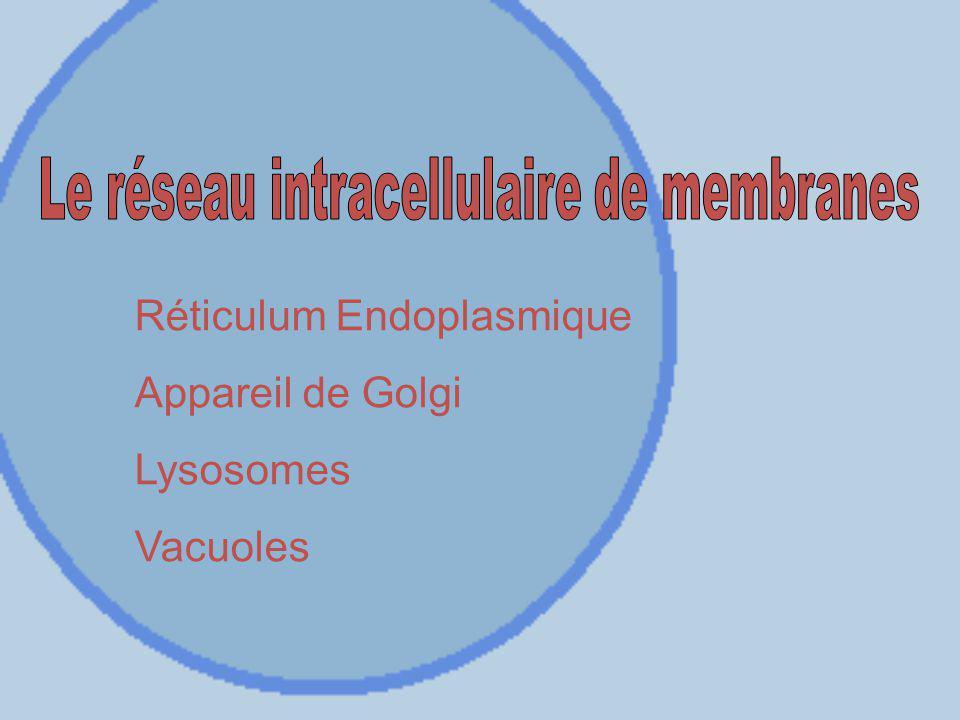Réticulum Endoplasmique Appareil de Golgi Lysosomes Vacuoles