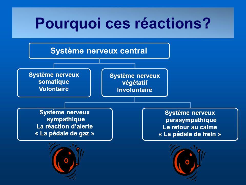 Pourquoi ces réactions? Système nerveux central Système nerveux somatique Volontaire Système nerveux végétatif Involontaire Système nerveux sympathiqu