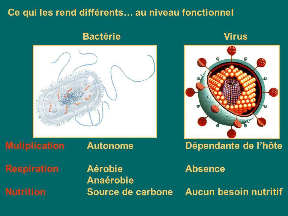 Membrane cytoplasmique Machinerie protéique ADN et ARN Conclusion : Virus; organisation simple et acellulaire Bactérie Virus Ce qui les rend différent