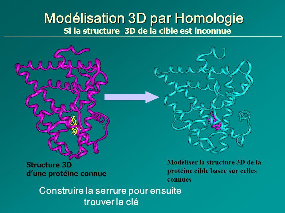 Modélisation 3D par Homologie Modéliser la structure 3D de la protéine cible basée sur celles connues Structure 3D dune protéine connue Si la structure 3D de la cible est inconnue Construire la serrure pour ensuite trouver la clé