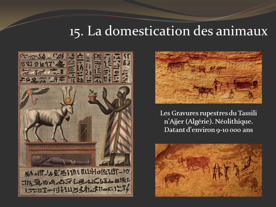 15. La domestication des animaux Les Gravures rupestres du Tassili n'Ajjer (Algérie). Néolithique. Datant d'environ 9-10 000 ans