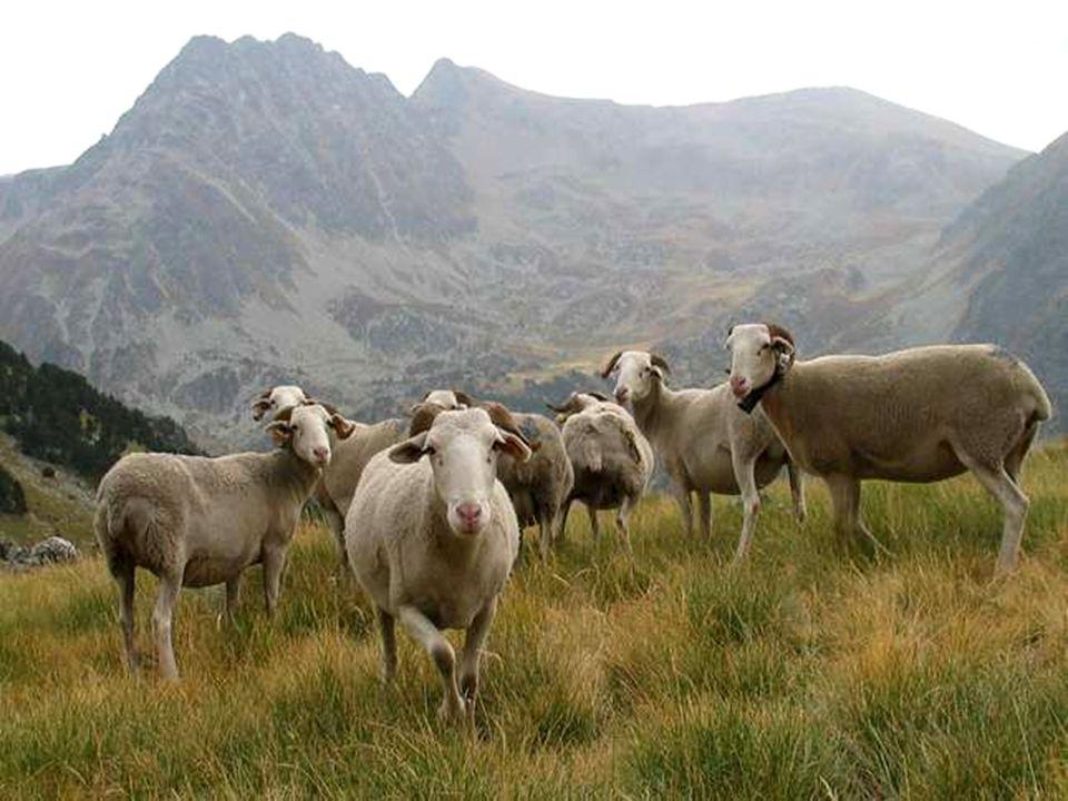 Au bout du monde Il existe un hameau du fond des Pyrénées Que nul ne peut connaître à part ses habitants, Découvert par hasard, au cours de randonnées