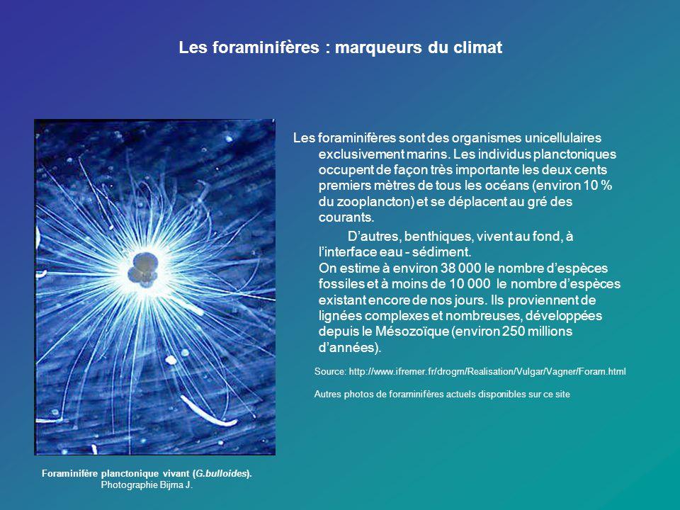 Les foraminifères : marqueurs du climat Les foraminifères sont des organismes unicellulaires exclusivement marins. Les individus planctoniques occupen