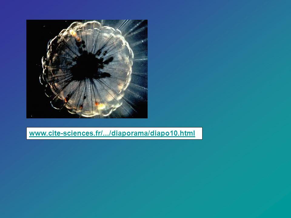 www.cite-sciences.fr/.../diaporama/diapo10.htmlwww.cite-sciences.fr/.../diaporama/diapo10.html.