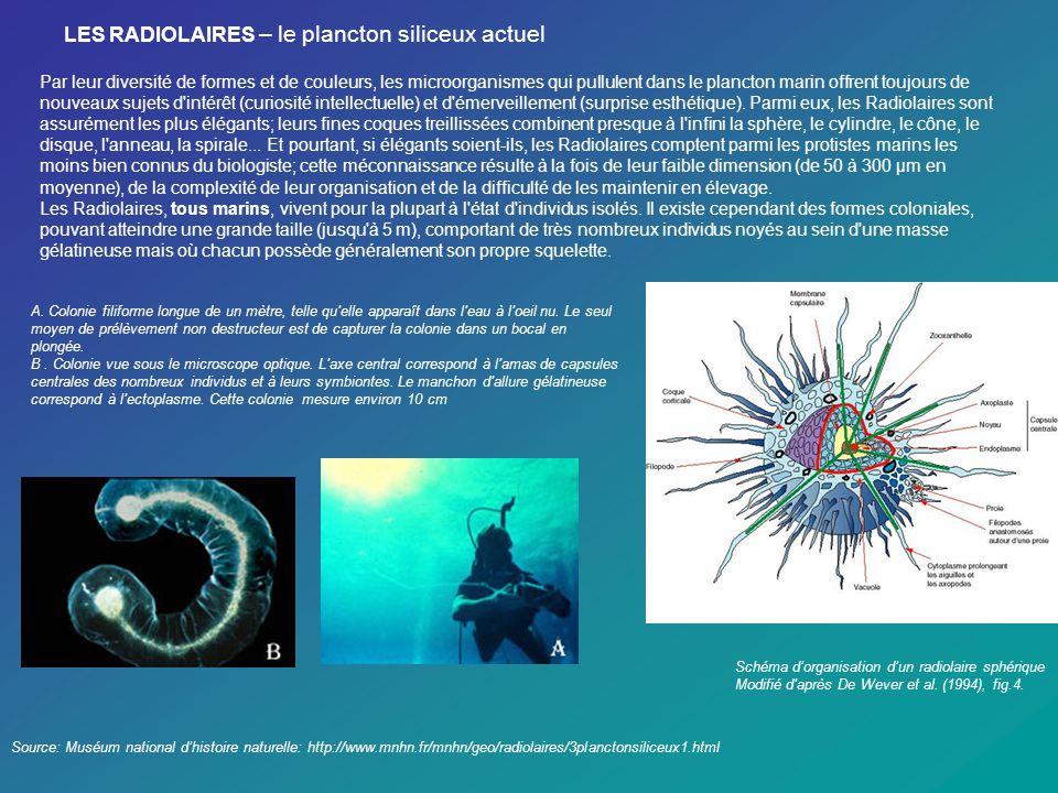 LES RADIOLAIRES – le plancton siliceux actuel Source: Muséum national dhistoire naturelle: http://www.mnhn.fr/mnhn/geo/radiolaires/3planctonsiliceux1.