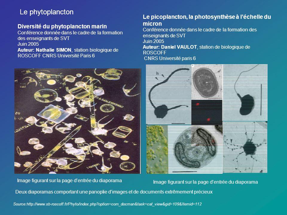 Le picoplancton, la photosynthèse à léchelle du micron Conférence donnée dans le cadre de la formation des enseignants de SVT Juin 2005 Auteur: Daniel