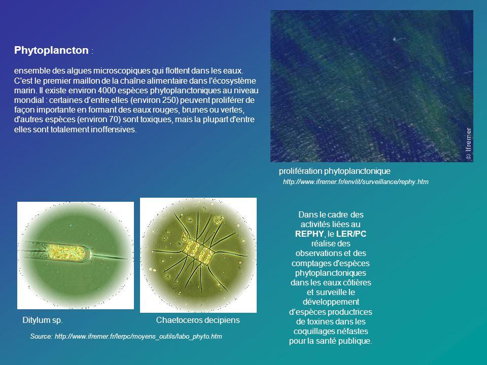 Phytoplancton: Source: site chilien: http://www.directemar.cl/spmaa/Estudiantes/tareas/plancton/ La presencia de algunas especies de dinoflagelados en zonas costeras es de singular importancia, ya que frente a condiciones ecológicas favorables para su desarrollo pueden aparecen en grandes densidades, lo que se conoce como florecimiento, floraciones algales o blooms , causando cambios en la coloración del agua de mar, fenómeno conocido como marea roja.