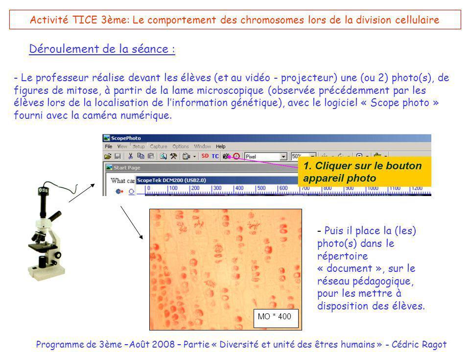 Programme de 3ème –Août 2008 – Partie « Diversité et unité des êtres humains » - Cédric Ragot Activité TICE 3ème: Le comportement des chromosomes lors de la division cellulaire Déroulement de la séance : - Le professeur réalise devant les élèves (et au vidéo - projecteur) une (ou 2) photo(s), de figures de mitose, à partir de la lame microscopique (observée précédemment par les élèves lors de la localisation de linformation génétique), avec le logiciel « Scope photo » fourni avec la caméra numérique.