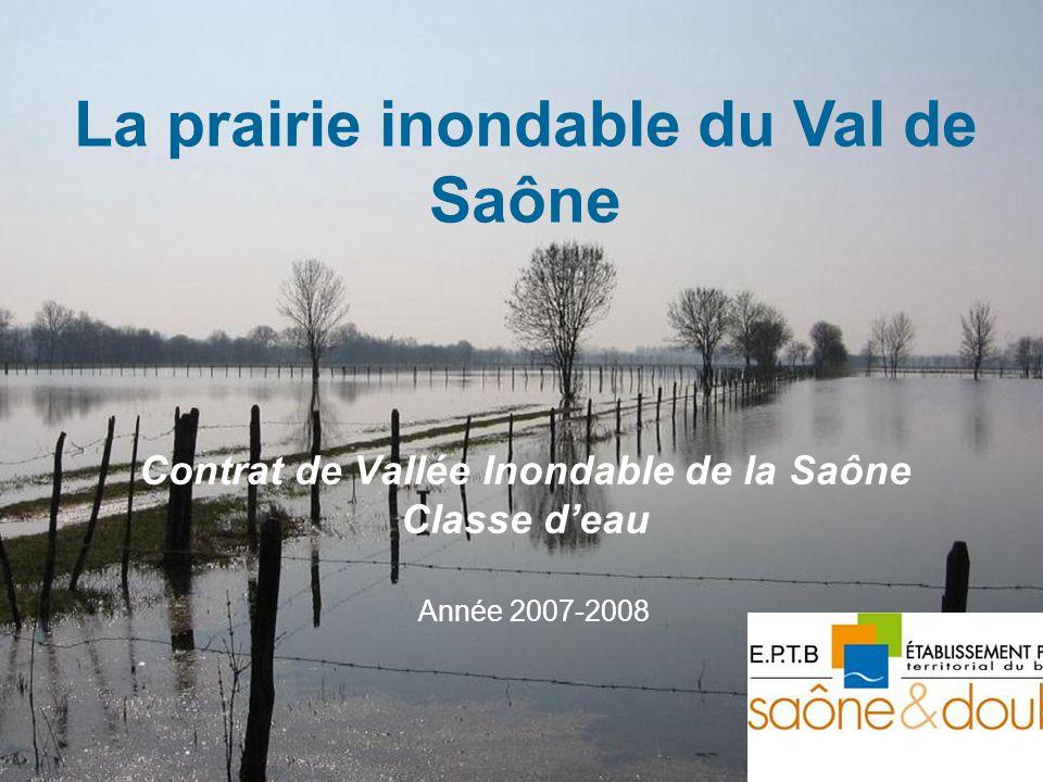 Contrat de Vallée Inondable de la Saône Classe deau Année 2007-2008 La prairie inondable du Val de Saône