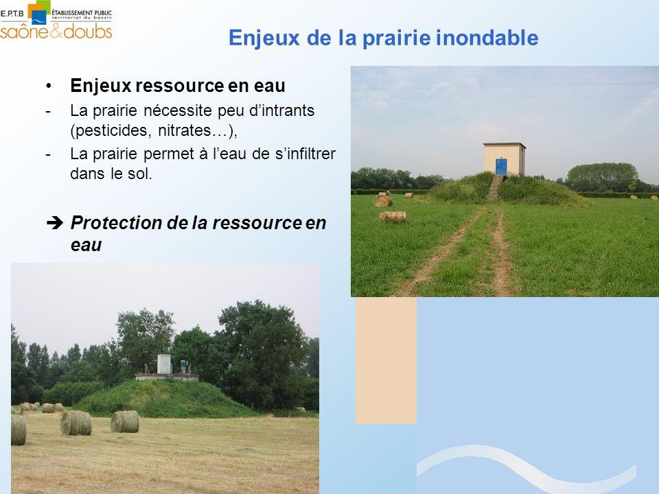 Enjeux ressource en eau -La prairie nécessite peu dintrants (pesticides, nitrates…), -La prairie permet à leau de sinfiltrer dans le sol. Protection d