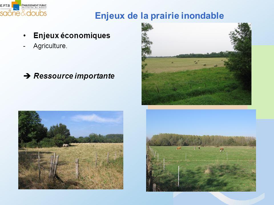 Enjeux économiques -Agriculture. Ressource importante Enjeux de la prairie inondable