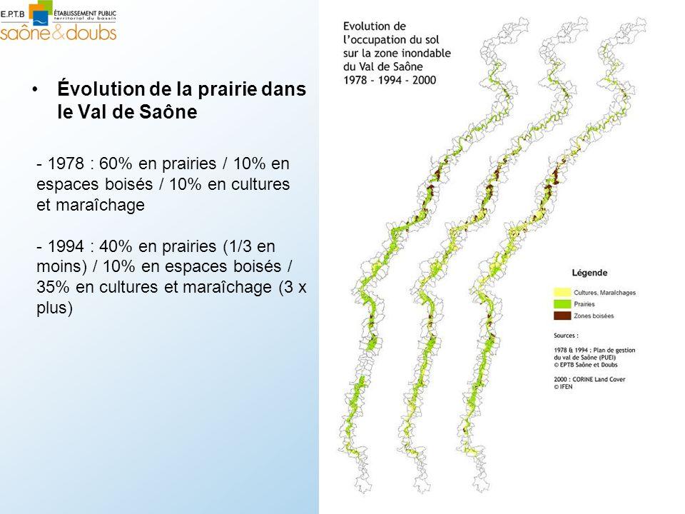 Évolution de la prairie dans le Val de Saône - 1978 : 60% en prairies / 10% en espaces boisés / 10% en cultures et maraîchage - 1994 : 40% en prairies (1/3 en moins) / 10% en espaces boisés / 35% en cultures et maraîchage (3 x plus)