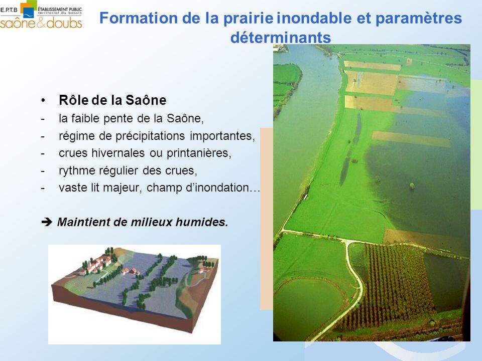 Rôle de la Saône -la faible pente de la Saône, -régime de précipitations importantes, -crues hivernales ou printanières, -rythme régulier des crues, -vaste lit majeur, champ dinondation… Maintient de milieux humides.