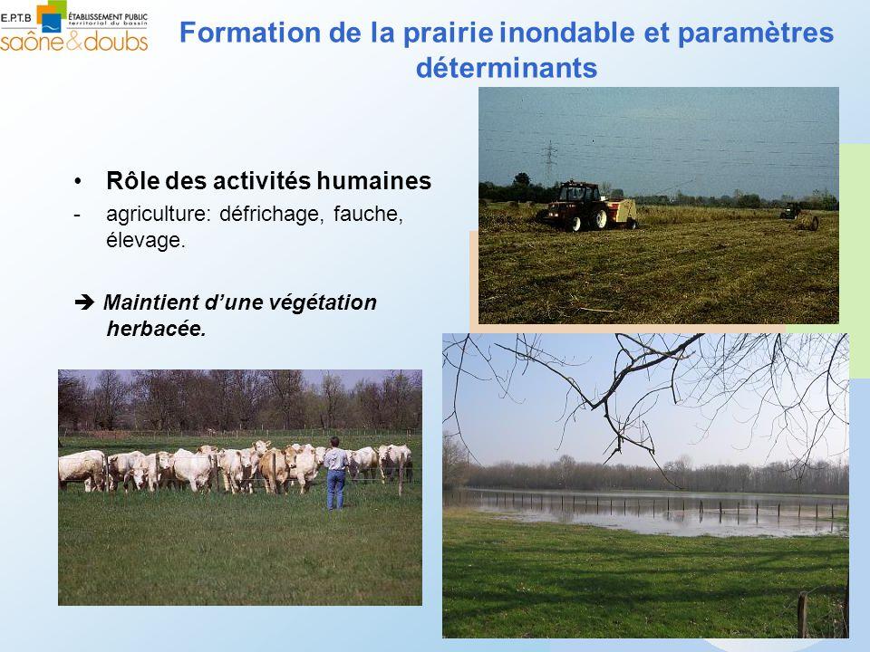 Rôle des activités humaines -agriculture: défrichage, fauche, élevage. Maintient dune végétation herbacée. Formation de la prairie inondable et paramè