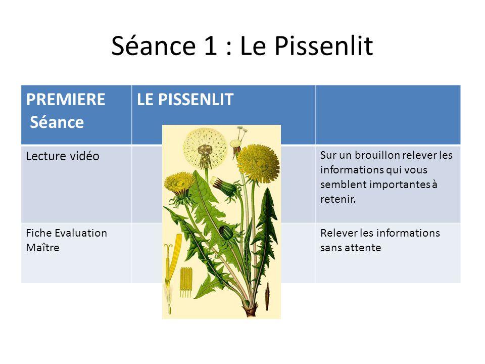 Séance 1 : Le Pissenlit PREMIERE Séance LE PISSENLIT Lecture vidéo Sur un brouillon relever les informations qui vous semblent importantes à retenir.