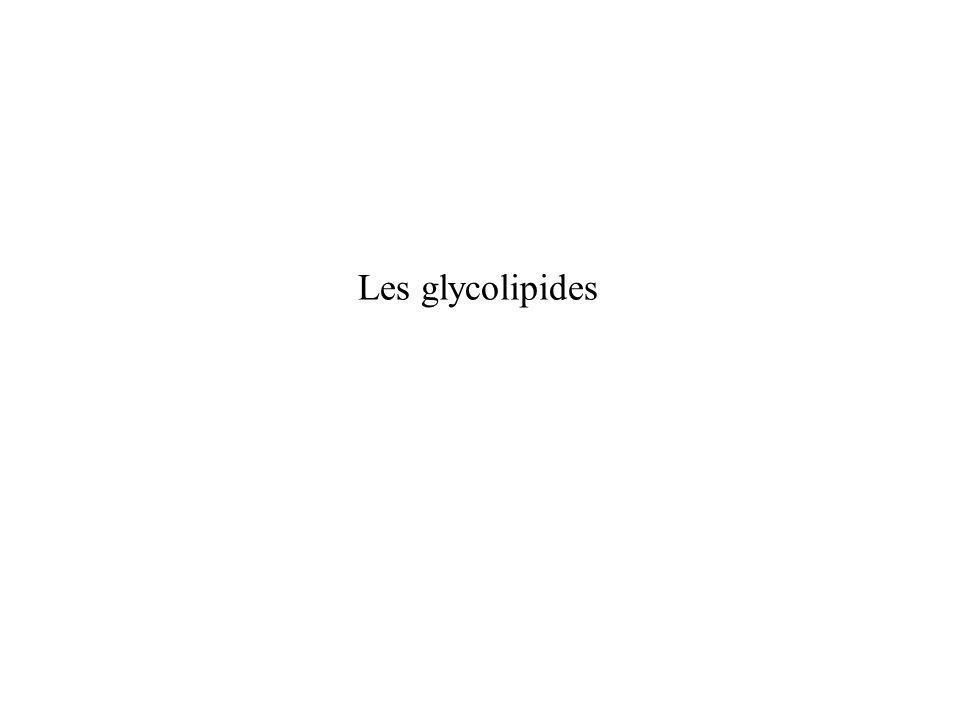 Les glycolipides
