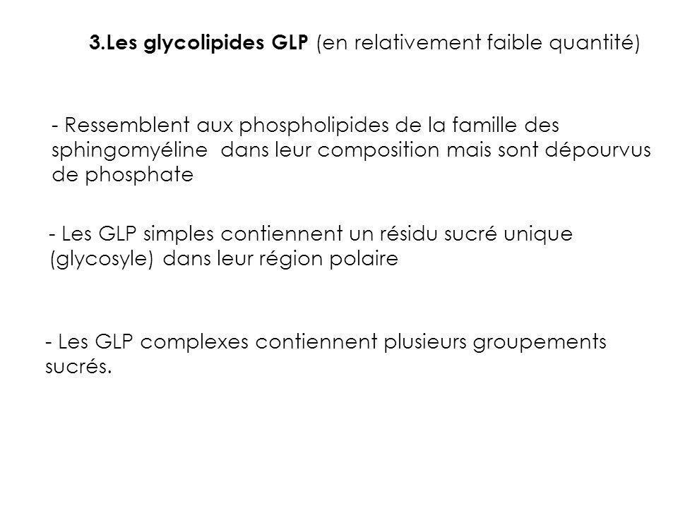3.Les glycolipides GLP (en relativement faible quantité) - Ressemblent aux phospholipides de la famille des sphingomyéline dans leur composition mais