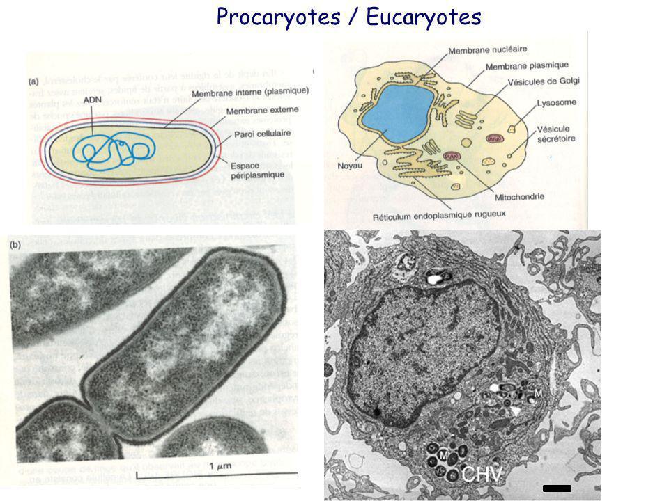 Procaryotes / Eucaryotes