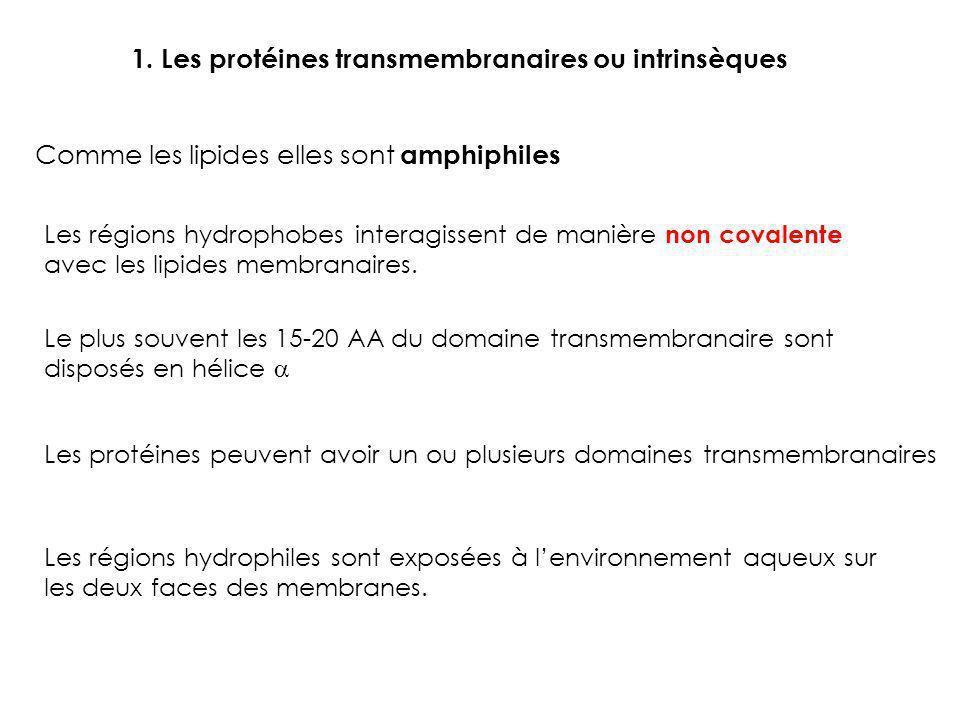 1. Les protéines transmembranaires ou intrinsèques Comme les lipides elles sont amphiphiles Les régions hydrophobes interagissent de manière non coval