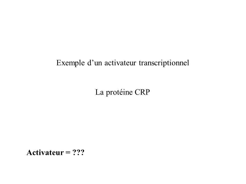 Activateur = ??? Exemple dun activateur transcriptionnel La protéine CRP