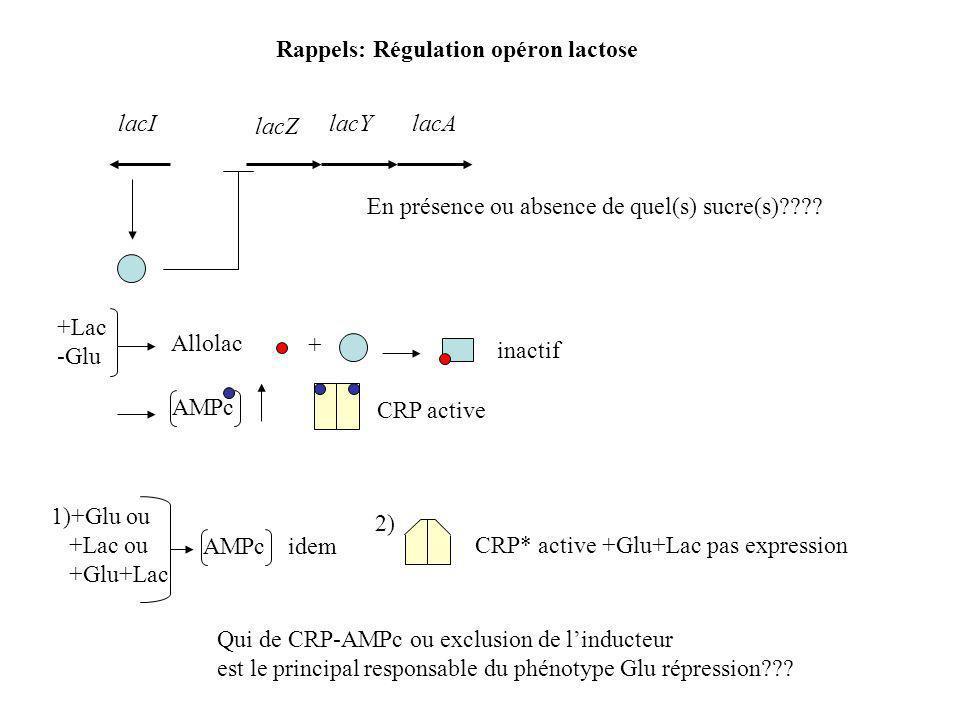 Rappels: Régulation opéron lactose lacZ lacYlacA lacI En présence ou absence de quel(s) sucre(s)???.