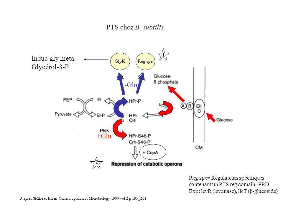 Reg spé= Régulateurs spécifiques contenant un PTS reg domain=PRD Exp: levR (levanase), licT ( -glucoside) GlpKReg spé -Glu +Glu PTS chez B.
