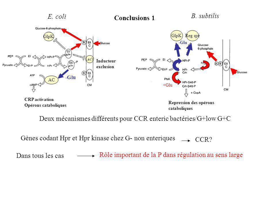 GlpKReg spé -Glu +Glu Conclusions 1 CRP activation Opérons cataboliques LacY GlpK AC -Glu Inducteur exclusion E.