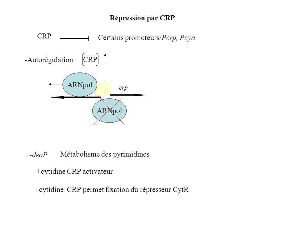 Répression par CRP CRP Certains promoteurs/Pcrp, Pcya CRP -Autorégulation ARNpol crp -deoP Métabolisme des pyrimidines +cytidine CRP activateur -cytidine CRP permet fixation du répresseur CytR