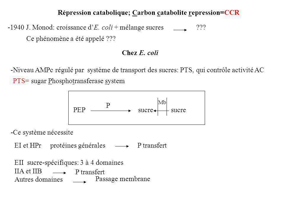 Répression catabolique; Carbon catabolite repression=CCR -1940 J.