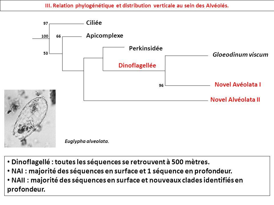 III. Relation phylogénétique et distribution verticale au sein des Alvéolés. Ciliée Apicomplexe Novel Alvéolata II Novel Avéolata I Gloeodinum viscum