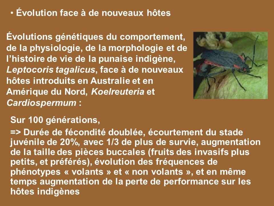Évolution face à de nouveaux compétiteurs Lintroduction du meunier noir (Catostomus commersonii) dans les lacs a conduit à lexclusion du saumon des fontaines (Salvelinus fontinalis) Compétition pour le milieu benthique : 9,9% de saumon en sympatrie avec le meunier noir contre 41,3% en allopatrie Polymorphisme trophique à la fois environnemental et génétique Catostomus commersonii Salvelinus fontinalis Proulx & Magnan, 2004, Bourke et al, 1999