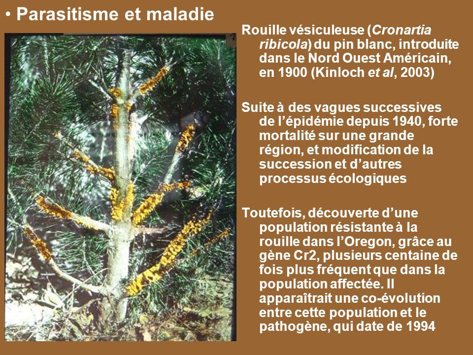 Rouille vésiculeuse (Cronartia ribicola) du pin blanc, introduite dans le Nord Ouest Américain, en 1900 (Kinloch et al, 2003) Suite à des vagues succe