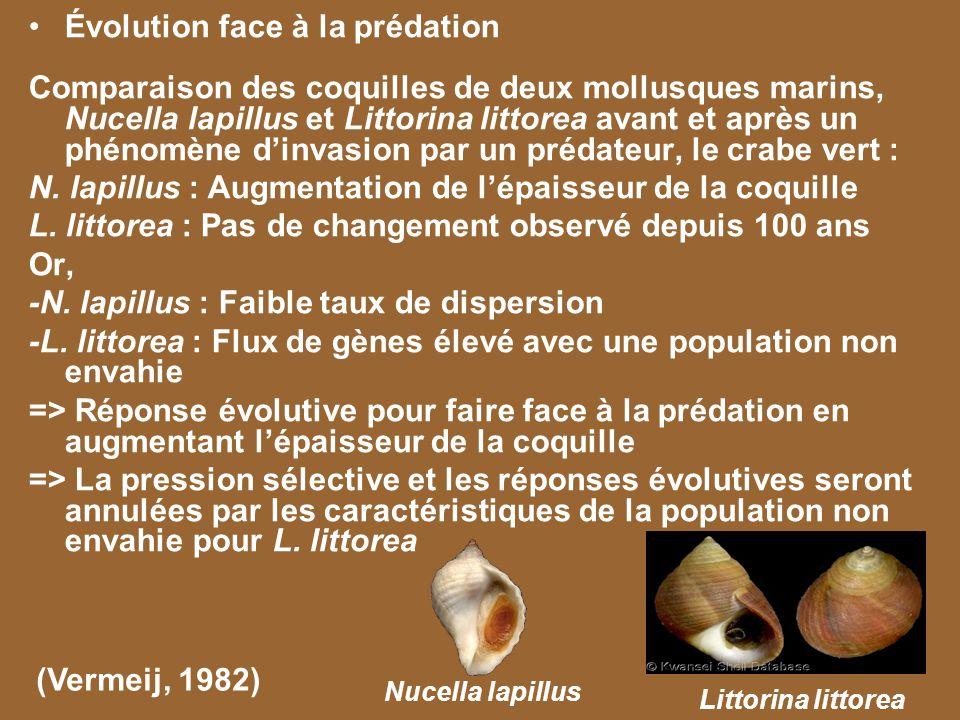 Évolution face à la prédation Comparaison des coquilles de deux mollusques marins, Nucella lapillus et Littorina littorea avant et après un phénomène