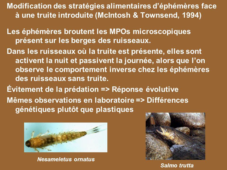 Modification des stratégies alimentaires déphémères face à une truite introduite (McIntosh & Townsend, 1994) Les éphémères broutent les MPOs microscop