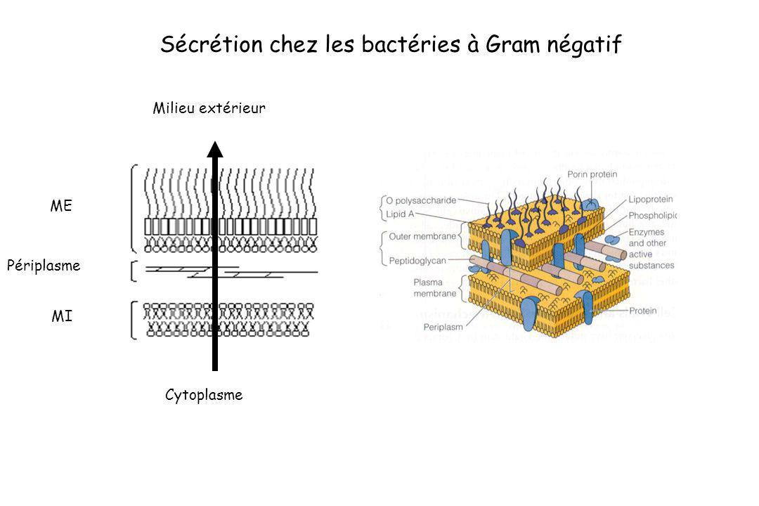 Sécrétion chez les bactéries à Gram négatif ME MI Milieu extérieur Cytoplasme Périplasme