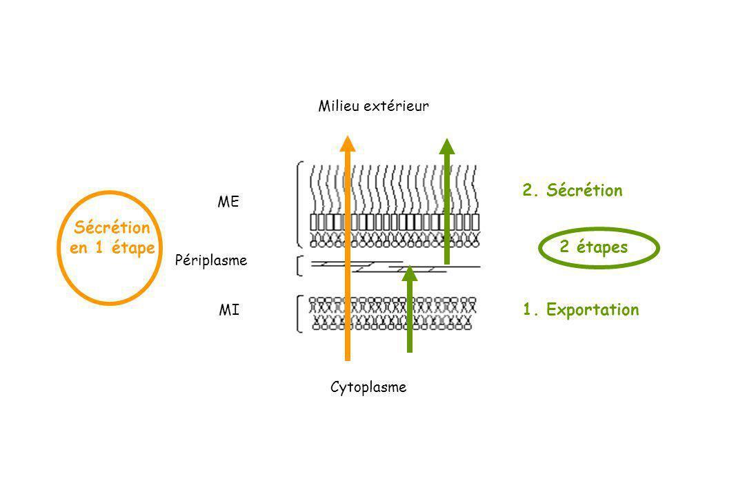 ME MI Milieu extérieur Cytoplasme Périplasme Sécrétion en 1 étape 2 étapes 1. Exportation 2. Sécrétion