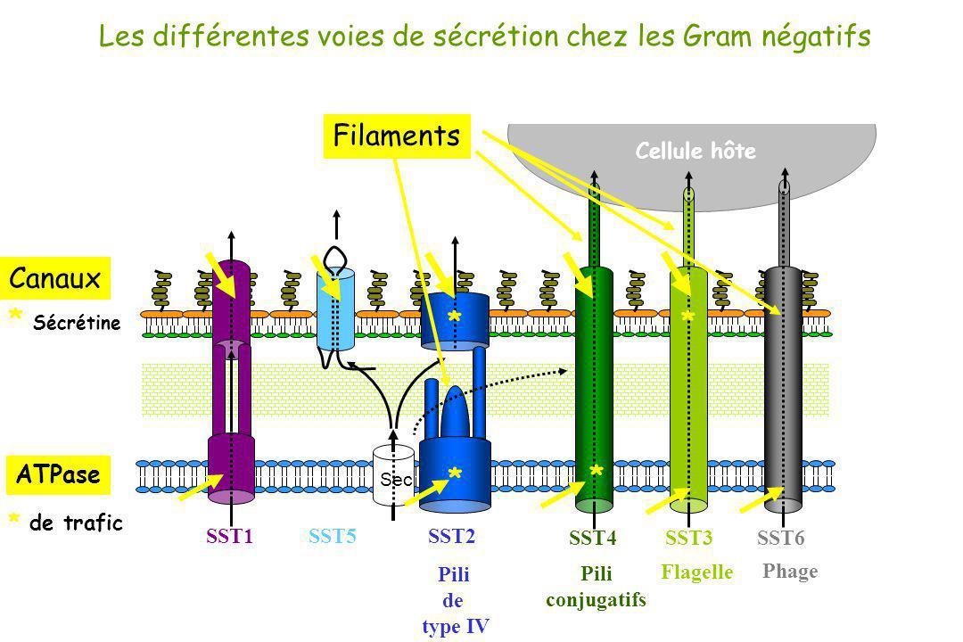 Cellule hôte Les différentes voies de sécrétion chez les Gram négatifs SST1 SST3SST4 SST6 Sec SST5SST2 Pili de type IV Pili conjugatifs Flagelle Phage