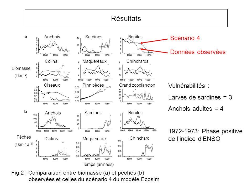 Résultats Anchois Colins Sardines Chinchards Maquereaux PinnipèdesOiseauxGrand zooplancton Bonites Anchois SardinesBonites ColinsMaquereaux Chinchard Biomasse (t.km - ²) Pêches (t.km - ².a -1) Temps (années) Données observées Fig.2 : Comparaison entre biomasse (a) et pêches (b) observées et celles du scénario 4 du modèle Ecosim Vulnérabilités : Larves de sardines = 3 Anchois adultes = 4 Scénario 4 1972-1973: Phase positive de lindice dENSO
