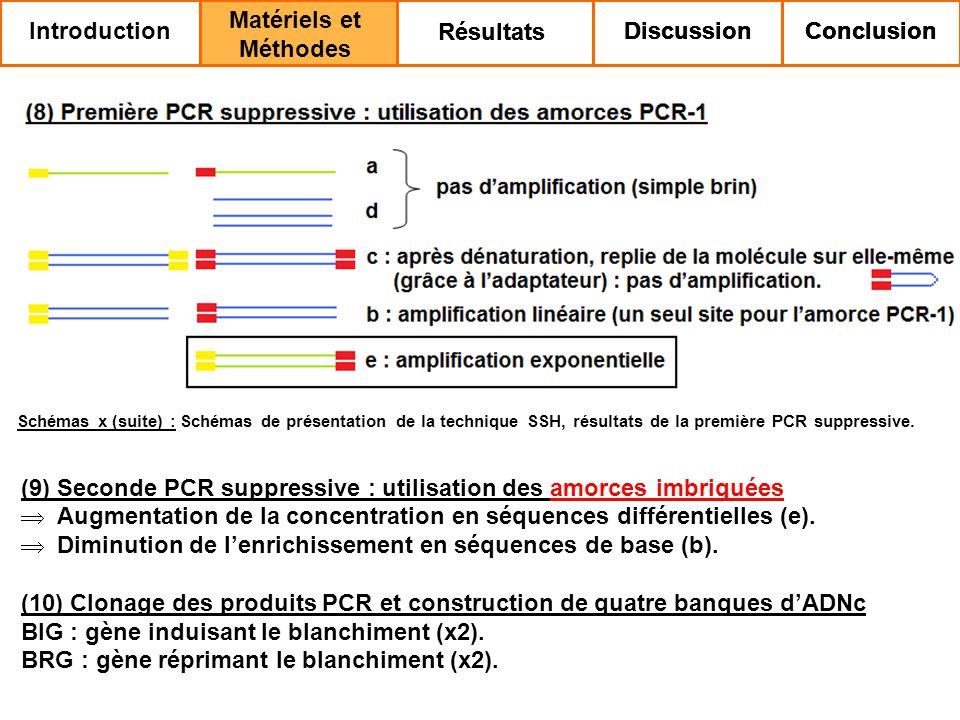 (9) Seconde PCR suppressive : utilisation des amorces imbriquées Augmentation de la concentration en séquences différentielles (e).